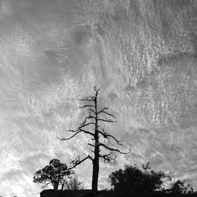 Tree vs Sky, USA