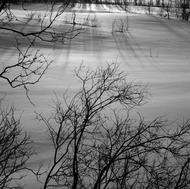 Through the Trees, Norway