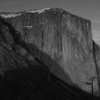 Lone Tree, Yosemite, USA