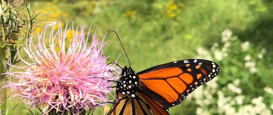 Plant a Pollinator Garden