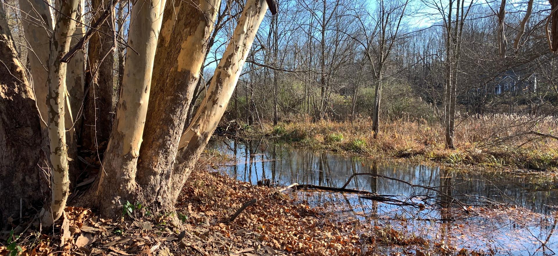 Trails at Rhinoceros Creek