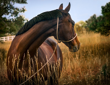 Horses-12-Edit-Edit-Edit.jpg