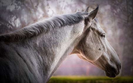 Horse Portraits -2.jpg