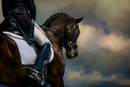 Horse Portraits -10-Edit-Edit-Edit-Edit-