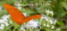 Julia_Butterfly_768x360px_etwGlow_Schrif