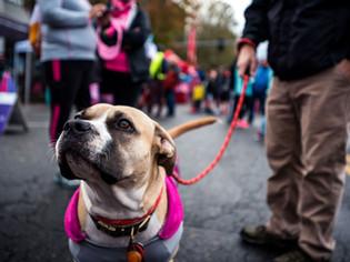 Saving a fellow runner's life at the Boston Marathon