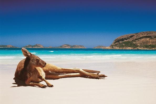 trabajar en austalia, canguro, relax, playa, ace australia