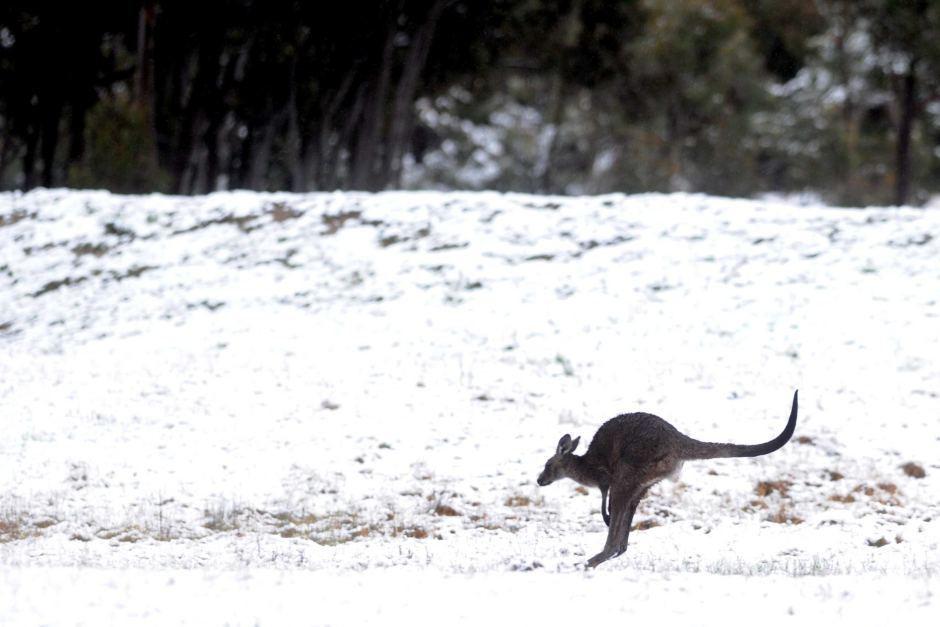 Nieve en Australia