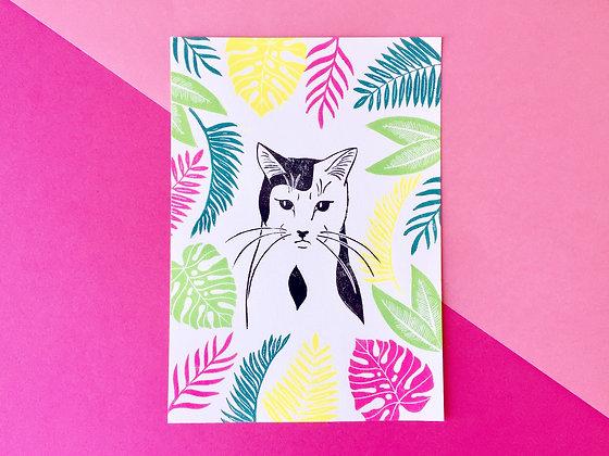 Gato tropical