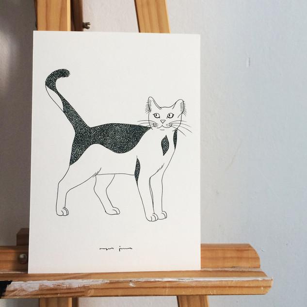 Gato Stuart.jpg