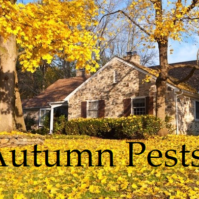 Autumn Pests
