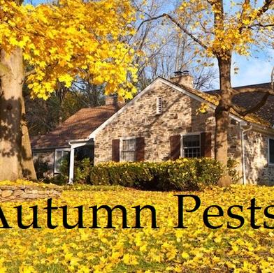 Autumn Pests