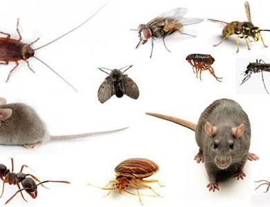 Winter Pest Issues in your home?