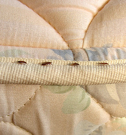 bed-bug-parade_1392x1500