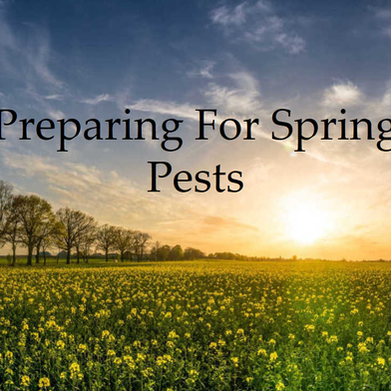 Preparing For Spring Pests