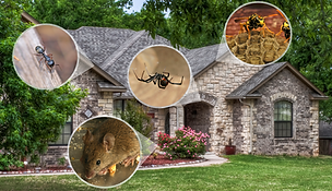 house with images of different possible pests