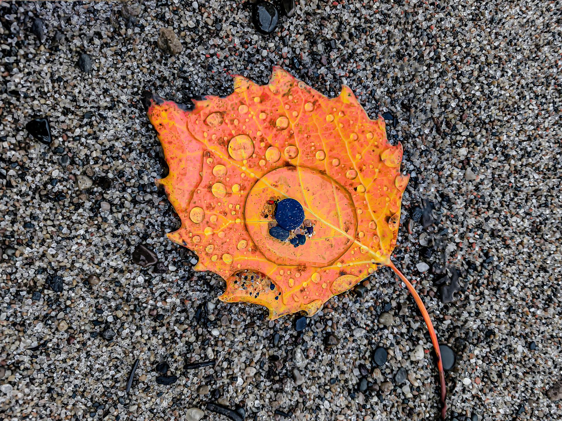 LeafOrange.jpg