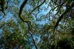 Eden Gardens State Park, Point Washington, FL USA