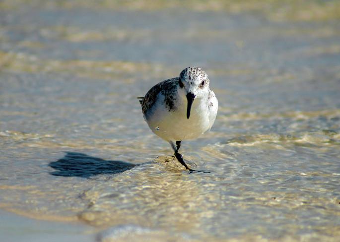 Santa Rosa Beach, FL USA