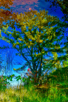 Hiawatha National Forest, AuTrain, MI USA