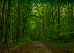 Hiawatha National Forest, MI USA