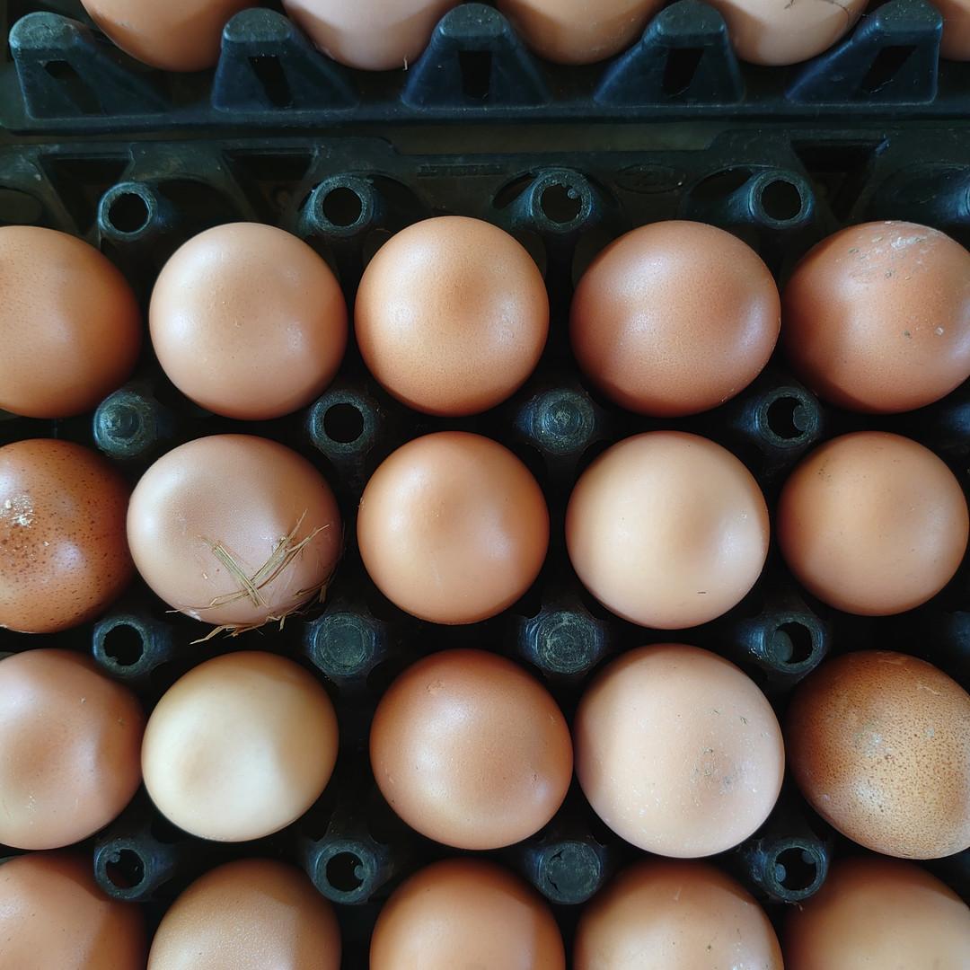 とれたて卵.JPG