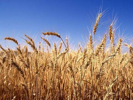 harvest_time.jpg
