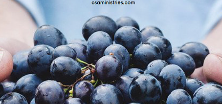 Jesus, The Firstfruit Offering