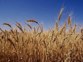 harvest_time_edited.jpg