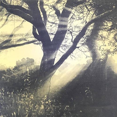 Dawn Glow by Ruth Mcdonald