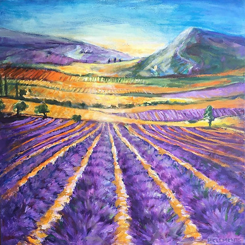 Lavender fields 1 by Patricia Clements