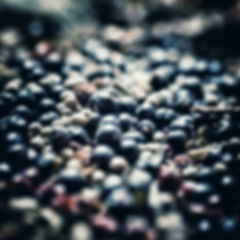 Hajduk Spirit Gin botanicals.jpeg