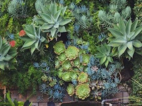 Saiba tudo sobre jardins verticais!