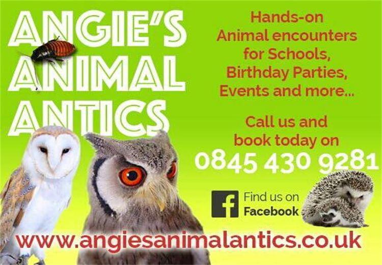 Angie-s Animal Antics - headline