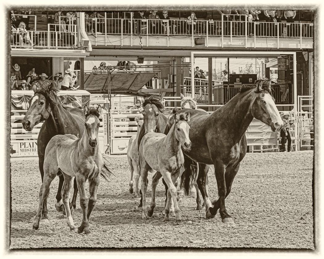 2019 Stampede Midway, Horses.jpg