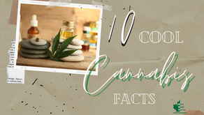 10 Cool Cannabis Facts