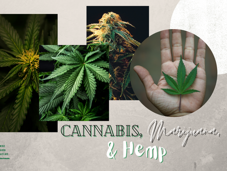 Cannabis, Marijuana, and Hemp | Terminology