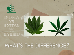 Indica VS Sativa VS Hybrid | What's the Difference?