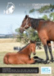 stallion guide.jpg