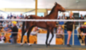 Lot 28 $36,000 purchased by Hartwigs.JPG
