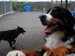 RVing with Dogs: Why you Should