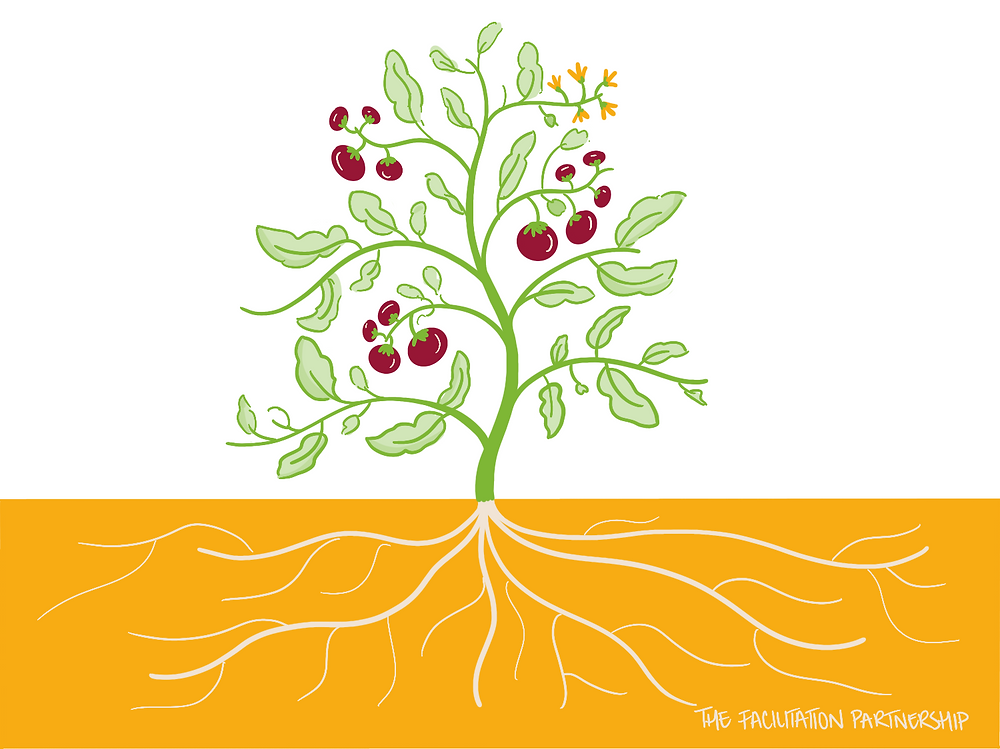 Illustration of a tomato plant with roots and flowering.