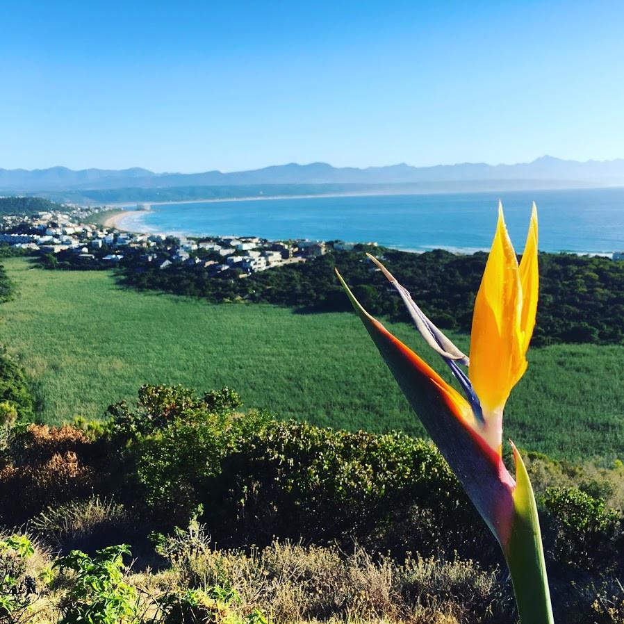 A Strelitzia's View of Bahia Formosa
