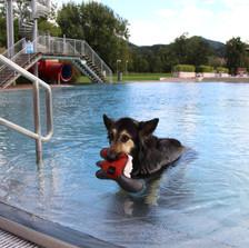 Asia Spa Leoben-Hundeschwimmen_Ikarus_3027_(c)Praebichl-Bergbahnen_Ikarus_web.JPG