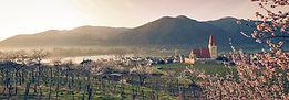 AH_Wachau_Bluete_Weissenkirchen_CF208301