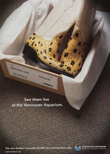 2000 . Vancouver Aquarium . Palmer Jarvis DDB . Art Direction:Cosmo Campbell