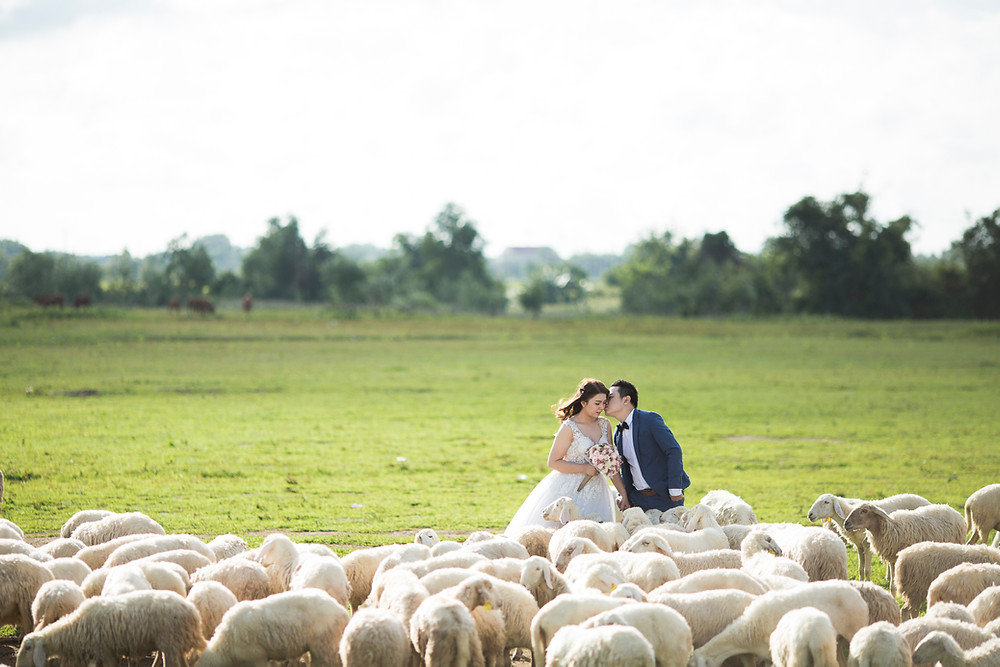 A photo of the couple kissing between sheeps at their adventure elopement, made by adventure wedding photographer