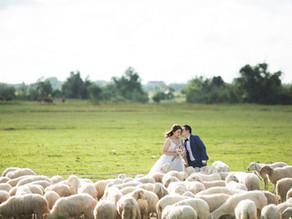 Shepherding 101