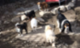 Freedom Doggy Care 4516 - 27th avenue