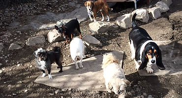 Kennel-free dog days